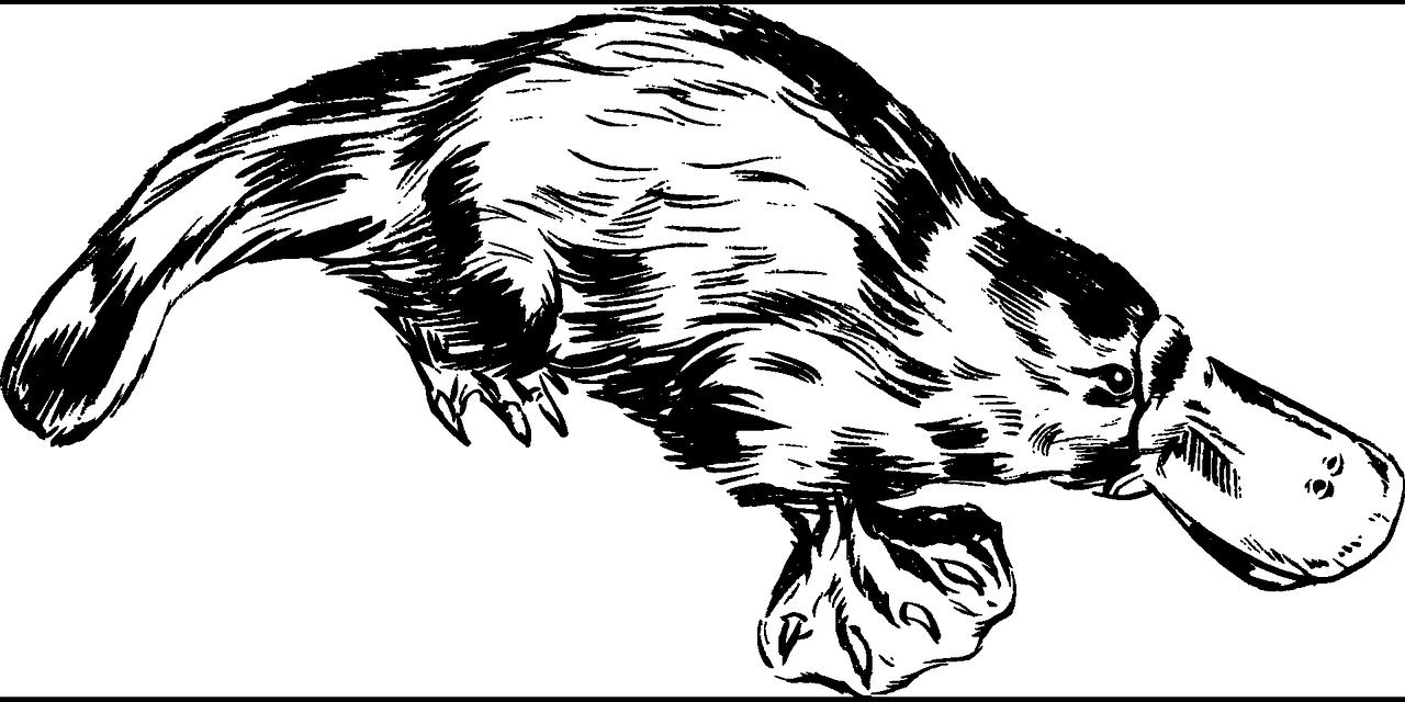 Platypus Animal Aussie Australian  - OpenClipart-Vectors / Pixabay